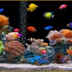 aquarium-pas-cher-2
